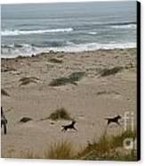 Run My Dogs Canvas Print