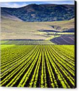 Rural Landscape With Planted Crops Canvas Print by David Buffington