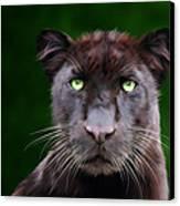 Saber Canvas Print by Big Cat Rescue