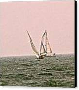 Sails Canvas Print by Amber Hennessey