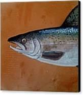 Salmon 1 Canvas Print by Andrew Drozdowicz