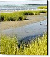 Salt Marsh Habitat With Flock Of Birds Canvas Print