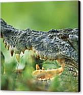 Saltwater Crocodile Crocodylus Porosus Canvas Print by Cyril Ruoso