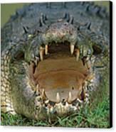 Saltwater Crocodile Crocodylus Porosus Canvas Print by Jean-Paul Ferrero