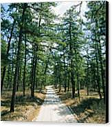 Sand Road Through The Pine Barrens, New Canvas Print by Skip Brown