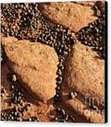 Sandstone And Pebbles Canvas Print by Gary Whitton