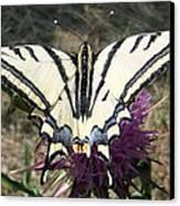 Scarce Swallowtail Canvas Print