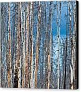 Scarred Pines Yellowstone Canvas Print by Steve Gadomski