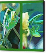 Science Class Diptych - Praying Mantis Canvas Print by Steve Ohlsen
