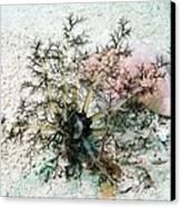 Sea Cucumber And Starfish Canvas Print