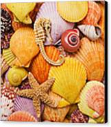 Sea Horse Starfish And Seashells  Canvas Print by Garry Gay