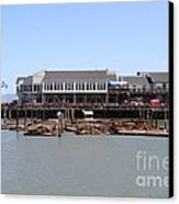 Sea Lions At Pier 39 San Francisco California . 7d14273 Canvas Print