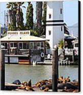 Sea Lions At Pier 39 San Francisco California . 7d14296 Canvas Print by Wingsdomain Art and Photography