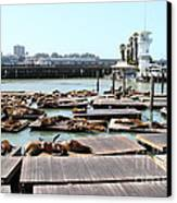 Sea Lions At Pier 39 San Francisco California . 7d14309 Canvas Print by Wingsdomain Art and Photography