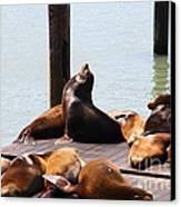 Sea Lions At Pier 39 San Francisco California . 7d14314 Canvas Print
