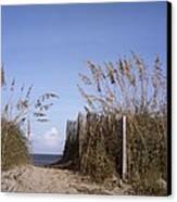 Sea Oats Line The Path Canvas Print