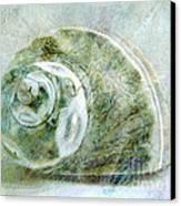 Sea Shell I Canvas Print