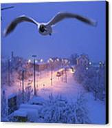 Seagull At Winter Canvas Print