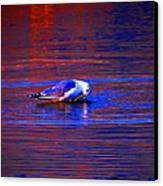 Seagull Bathing In Dramatic Light Canvas Print by Catherine Natalia  Roche