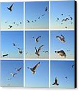 Seagull Collage 2 Canvas Print