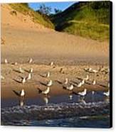 Seagulls At The Bowl Canvas Print