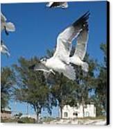 Seagulls On Anna Maria Island Canvas Print