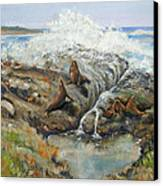 Seal Sanctuary Canvas Print by Max Mckenzie