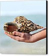 Seashell In Hand Canvas Print