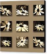 Sepia Daisy Flower Series Canvas Print by Sumit Mehndiratta