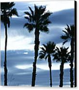 Seven Palms Canvas Print