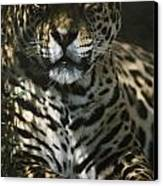 Shadows Flicker Over A Jaguar Panthera Canvas Print by Hope Ryden