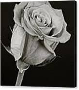 Sharp Rose Black And White Canvas Print