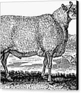 Sheep, C1800 Canvas Print by Granger
