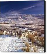 Sheep In Snow, Glenshane, Co Derry Canvas Print by The Irish Image Collection