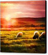 Sheep In Sunset Canvas Print by Suni Roveto