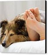 Sheltie Sleeping With Her Owner Canvas Print by Kati Molin