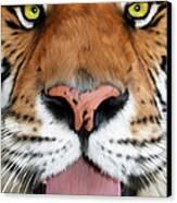 Sherekhan Canvas Print by Big Cat Rescue