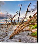 Shoreline Beach Driftwood And Grass Canvas Print by Jenny Ellen Photography