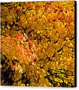 Showing Off Canvas Print by Rich Franco