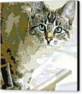 Siamese Mix Kitten Canvas Print by Dorothy Walker