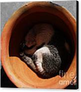 Siesta 2 Canvas Print by Xueling Zou