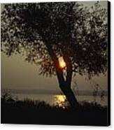 Silhouette Of Willow Tree At Sunset Canvas Print