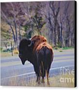 Single Buffalo In Yellowstone Np Canvas Print by Susanne Van Hulst