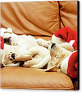 Six Puppies Sleep On Sofa, Some Wear Santa Hats Canvas Print