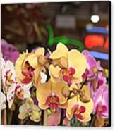 Sixth Avenue Orchids Canvas Print by Denice Breaux