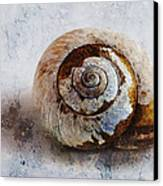 Snail Shell Canvas Print by Ron Jones