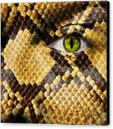 Snake Eye Canvas Print by Semmick Photo