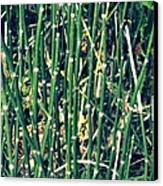 Snake Grass On The Beach Canvas Print by Michelle Calkins