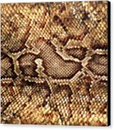 Snake Skin Canvas Print by Abner Merchan