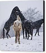 Snow Day I Canvas Print by Betsy Knapp